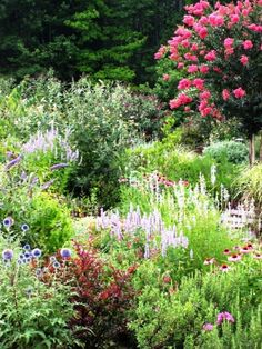 Deer Resistant Garden