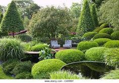 Image result for BOX TOPIARY CHELSEA