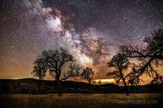 Cottonwoods and Milky Way