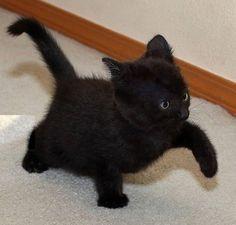 Untitled Hayvanlar Kedi Siyah