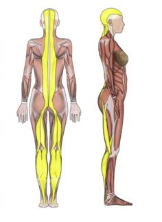 When fascia is tight and distorted it can torque, pull, jam, and ...