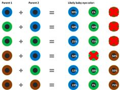 baby eye color chart according to genetics  What are the odds of that like my dad has green eyes and my biologicale mother has brown eyes, but me and my brother have blue eyes, his are more of a  blue-blue whereas mine are a pale-ish blue that change to a deep blue in the summer time.  whao 12% chonce of having blue eyes for 1 baby, but then to get 2 kids with blue eyes whao  #suchwhao