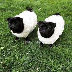 Dog Clothing Pug Puppies : Photo - Tap the pin for the most adorable pawtastic fur baby apparel! You'll love the dog clothes and cat clothes! Funny Animal Pictures, Cute Funny Animals, Cute Baby Animals, Animals And Pets, Cute Baby Pugs, Dog Pictures, Black Pug Puppies, Cute Dogs And Puppies, Bulldog Puppies