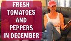 How To Plant Tomato & Pepper Seeds Indoors - Arizona Desert Organic Vege...