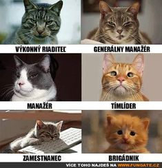 Purrfectly Toasted Caturday Memes Cat Memes) - World's largest collection of cat memes and other animals Funny Animal Memes, Funny Animal Pictures, Cat Memes, Funny Cats, Funny Animals, Cute Animals, Funny Memes, Cartoon Memes, Funny Cartoons