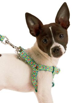 See Spot Strut Harness    I heard harnesses were better for dogs.  True or false?