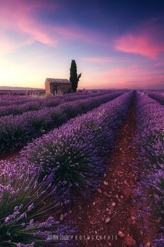 Lavender Lines by Julien Loize on 500px