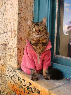 Lorenzo Cat - A Maine Coon with the patience of a Buddhist monk and the soul of a philosopher, Lorenzo the Cat likes to wear clothes. Feline art photography by Joann Biondi. Website: www.LorenzoTheCat.com Etsy: www.etsy.com/shop/LorenzoTheCat