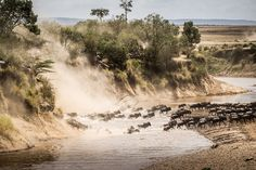 Great Migration / Safaris in Tanzania