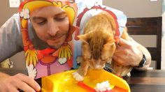 Playing Pie Face with My Cat!