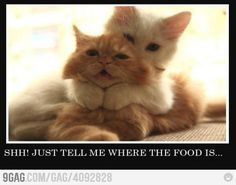 Just tell me where the food is