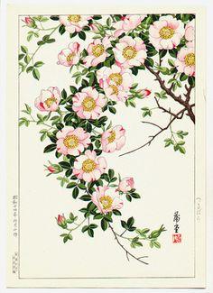 西村 蒲堂 / Nishimura Hodo - Wild Vine Rose, 1939