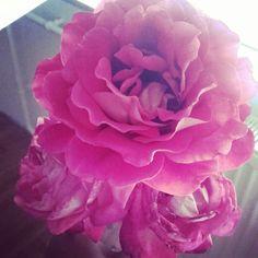 Virag a kertből