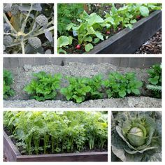 Learn how to grow vegetables in raised garden beds.