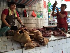 STOP Yulin Festival 2016! Thousands Of Pets Will Be Inhumanely Destroyed! | PetitionHub.org
