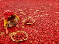 Red - Took this while hiking in Shan State in Myanmar. It was chilli season and they were drying out everywhere.
