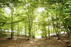 Green Path Skog - Fototapet & Tapet - Photowall