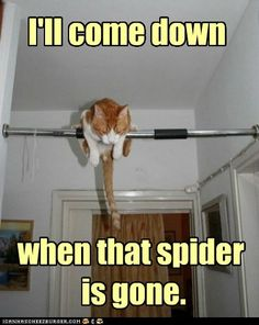 I'll come down when that spider is gone.