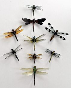 Dragonfly Magnets,Clear wings,  Wholesale Lot of 9, Insects, favors, decorations, nature, handmade