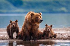Retrato de familia, Península de Kamchatka, Rusia