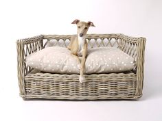 Raised Rattan Dog Be