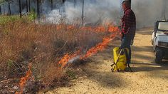 Certified Burn Manager Terry Johnson keeps a watchful eye on the prescribed control burn at The Crosby Arboretum, fall 2012.