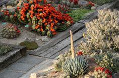 Check out http://hdbgi.com!  Hillside Desert Botanical Gardens. Yakima, WA.
