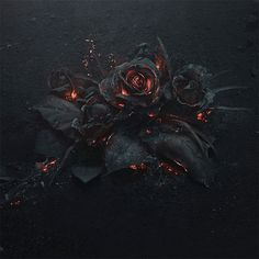 Future Evol Album Cover and Tracklist Revealed, Plus Announces Apple Music Deal Rose Wallpaper, Black Wallpaper, Wallpaper Backgrounds, Iphone Wallpaper, Screen Wallpaper, Evol Album, Cd Album, Future Evol, Future Freebandz