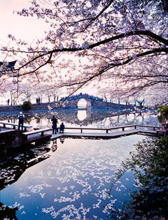 Cherry blossom - Yuantouzhu, Wuxi, China (by xiaozhong li (飞鸿留影) on Flickr)