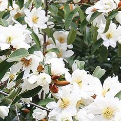 If you are looking a hedging or screening plant, we look at some of the best, including flowering hedges and screening plants for Australian conditions.