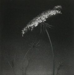 ☾ Midnight Dreams ☽ dreamy dramatic black and white photography - Mikio Watanabe, Carotte sauvage, Mezzotint