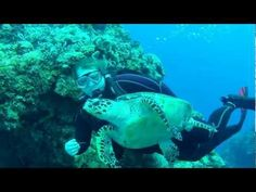 Atlanta Scuba Diver Swims with Sea Turtle in Cozumel