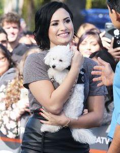 Buddy, cachorro de estimação de Demi Lovato, sofre acidente fatal #Cachorrinho, #Cantora, #Forever, #Morte http://popzone.tv/buddy-cachorro-de-estimacao-de-demi-lovato-sofre-acidente-fatal/