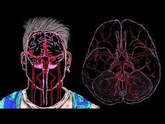 Cerebral cortex - YouTube   A&P   Neurological System Videos