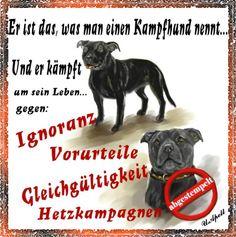 http://www.moehre-und-co.de/Download/Flyer/Flyer-Kampfhund01.jpg