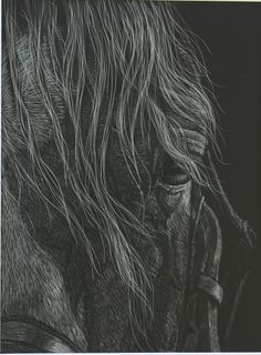 Horse Art by Vonnie   The Look..scratchboard
