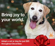 There's never been a better time to bring joy to your world—and theirs! Throughout the month of December, we're offering reduced adoption fees on our Sanctuary animals. That's not all, though. We're covering the cost of flights home for the first 15 dogs and cats adopted to make it easier to cozy up 'round the fire this holiday season.
