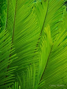 'Fern-tastic' Poster by Rebelle - Aesthetic - Plants Go Green, Bright Green, Green Colors, Colours, Jack Green, World Of Color, Color Of Life, Photographie Macro Nature, Nature Verte