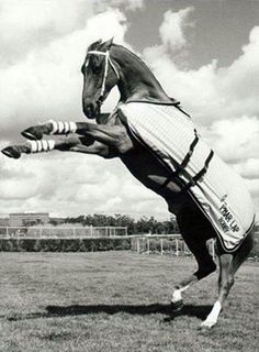 Probably 'Towering Inferno' the horse who played Phar Lap in the movie of the same name.