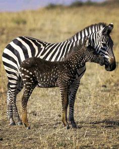 Animals Of The World, Animals And Pets, Baby Animals, Cute Animals, Beautiful Creatures, Animals Beautiful, Mundo Animal, Animal Kingdom, Pet Birds