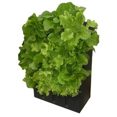 Little Moflo Aeroponics System- vertical rows allow you to grow more plants in less space!