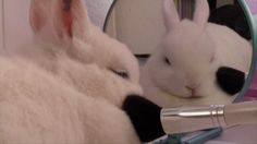 Bunnies are actually GIF royalty. We owe them everything.