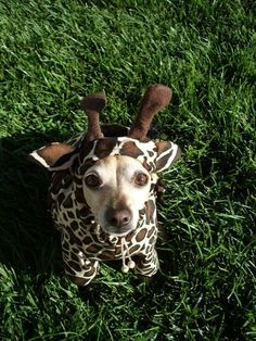 Is it a giraffe? A Giraffe-a-dog? Lola needs this asap. Baby Dogs, Pet Dogs, Dog Cat, Doggies, Pet Pet, Pet Halloween Costumes, Pet Costumes, Happy Halloween, Animal Costumes