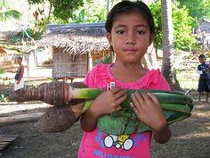 Die Regierung der Philippinen will auf den Inseln Palawan und Mindanao den großflächigen Anbau von Ölpalmen vorantreiben und holt vor allem malaysische Investoren ins Land. Das ist eine Katastrophe für die Regenwälder und das Leben der indigenen Bevölkerung. Umweltschützer fordern dringend ein Palmöl-Moratorium.