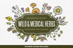 Wild & Medical Herbs by Chelovector on @creativemarket