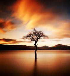 Loch Lomond, Scotland All Nature, Amazing Nature, Tree Photography, Landscape Photography, Terre Nature, Lone Tree, Loch Lomond, Belle Photo, Pretty Pictures