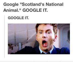 Because it made me laugh... Scotland's national animal! No way!