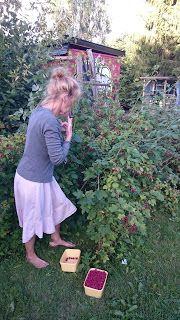Urteklinikken - Helt Naturlig: Bringebær - i rosenes fotspor
