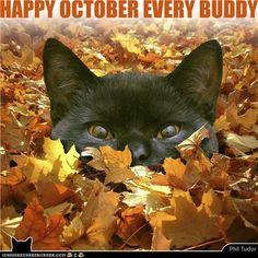Happy October Every Buddy! . . . . . . . .