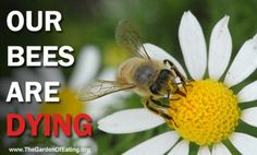 I pinned this on my gardening board because saving the bees involves mostly outside, although there are a couple things we can do while inside,also, as the article mentions.